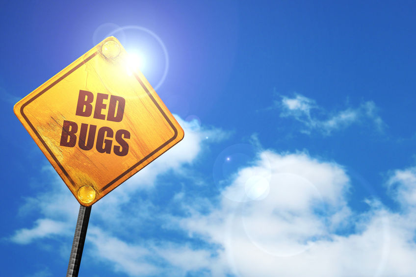 bed bugs bites warning sign