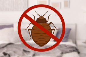 no bed bugs after a heat treatment